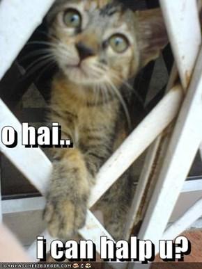 o hai.. i can halp u?