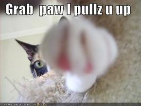 Grab  paw I pullz u up