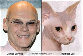 James Carville TotallyLooksLike.com Hairless Cat