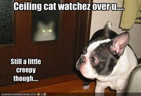 Ceiling cat watchez over u....