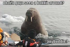 ohai!u guyz seen a bukkit around?  ...anybuddie?