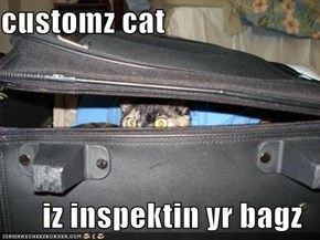 customz cat  iz inspektin yr bagz
