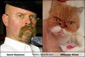 Jamie Hyneman TotallyLooksLike.com Mifbuster Kitteh