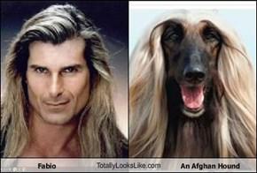 Fabio TotallyLooksLike.com An Afghan Hound