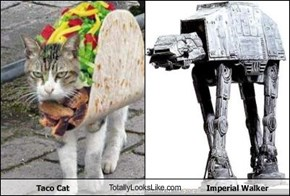 Taco Cat TotallyLooksLike.com Imperial Walker