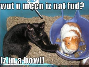 wut u meen iz nat fud?  Iz in a bowl!