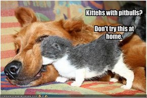 Kittehs with pitbulls?