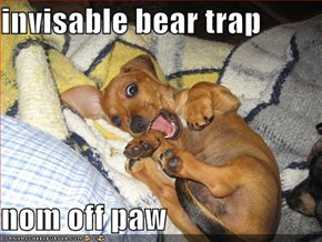 invisable bear trap  nom off paw