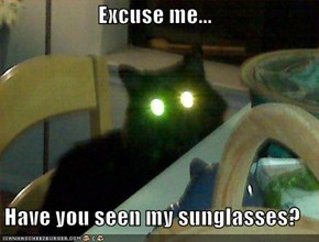 Excuse me...  Have you seen my sunglasses?