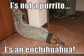 I's not a purrito...  I's an enchihuahua!