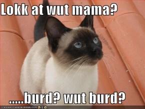 Lokk at wut mama?     .....burd? wut burd?