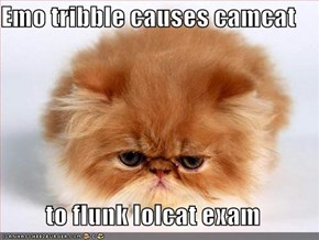 Emo tribble causes camcat  to flunk lolcat exam