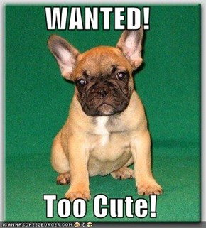 WANTED!   Too Cute!