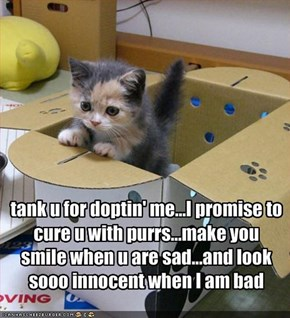 tank u for doptin' me...I promise to cure u with purrs...make you smile when u are sad...and look sooo innocent when I am bad