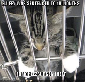 FLUFFY WAS SENTENCED TO 18 MONTHS  FOR CHEEZBURGER THEFT