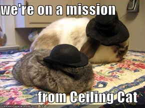 we're on a mission  from Ceiling Cat