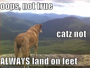 oops, not true catz not ALWAYS land on feet
