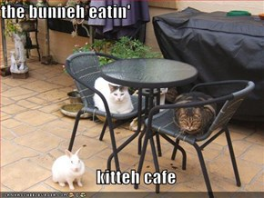 the bunneh eatin'                               kitteh cafe