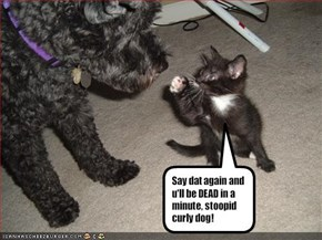 Say dat again and u'll be DEAD in a minute, stoopid curly dog!