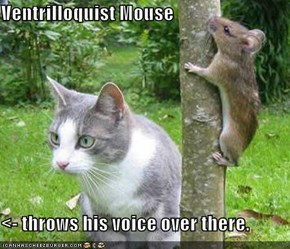 Ventrilloquist Mouse  <- throws his voice over there.