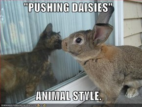"""PUSHING DAISIES""  ANIMAL STYLE."