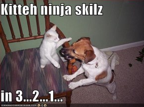 Kitteh ninja skilz  in 3...2...1...