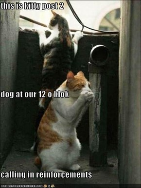 this is kitty post 2 dog at our 12 o klok calling in reinforcements
