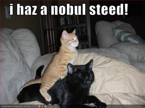 i haz a nobul steed!