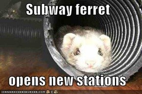 Subway ferret  opens new stations