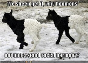 We sheep get it, why hoomons  not understand racial harmony?