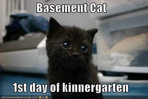 Basement Cat  1st day of kinnergarten