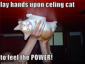lay hands upon celing cat  to feel the POWER!