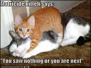 "Matricide kitteh says:  ""You saw nothing or you are next"""