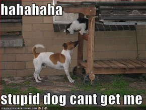 hahahaha  stupid dog cant get me