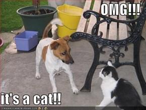 OMG!!!  it's a cat!!