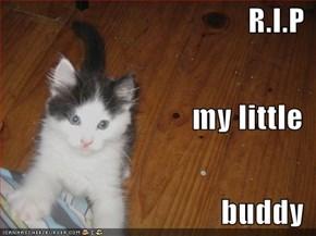 R.I.P    my little  buddy