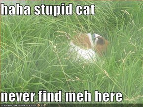 haha stupid cat  never find meh here