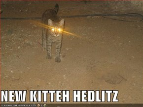 NEW KITTEH HEDLITZ