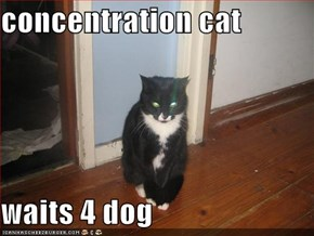 concentration cat  waits 4 dog