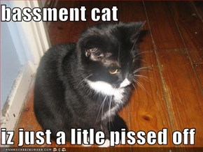bassment cat   iz just a litle pissed off