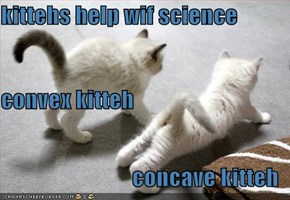 kittehs help wif science  convex kitteh concave kitteh