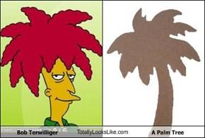 Bob Terwilliger TotallyLooksLike.com A Palm Tree