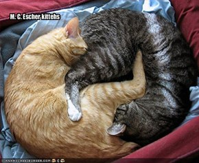M. C. Escher kittehs