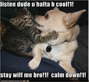 listen dude u hafta b cool!1!  stay wiff me bro!1!  calm down!1!