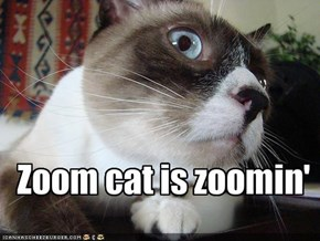 Zoom cat is zoomin'