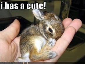 i has a cute!