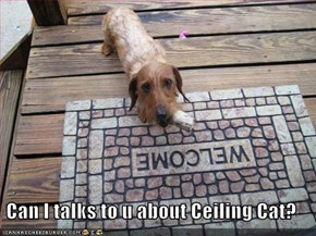 Can I talks to u about Ceiling Cat?