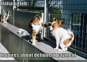 Mafia kitteh  Inquires about deliquent payment