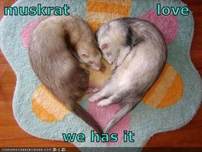 muskrat                  love  we has it