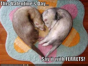 This Valentine's Day...  Say it with FERRETS!
